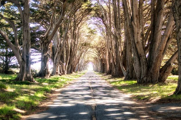 "The famous Monterey Cypress ""Tree Tunnel"" at Point Reyes. Photo by Max Denisevich (Flickr)."