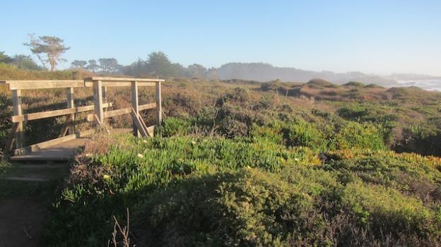 The coastal trail traverses a lovely stretch of the coastal strand plant community. Molly Lautamo photo.