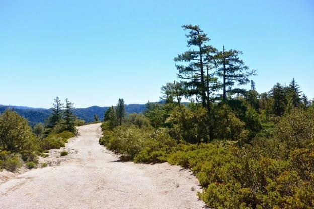 Olmo Fire Road traverses dry chaparral familiar to anyone who's hiked the upper reaches of neighboring Big Basin Redwoods State Park.