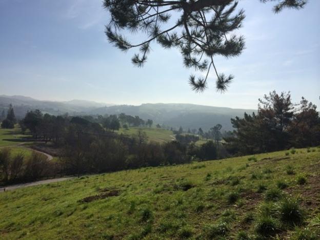 Winter rains turn the hills of Ed Levin Park brilliant green. Hilltromper photo.