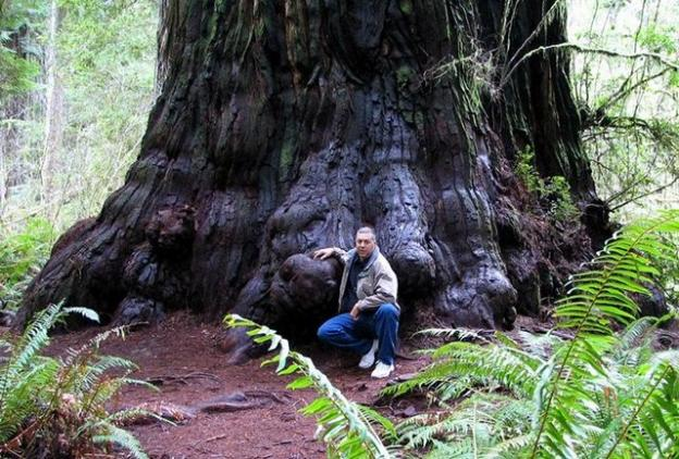 9. Redwoods live so long—and are treasured by humans for building—because they are extremely resistant to insects, fire and rot. (More below.) Photo by MD Vaden.