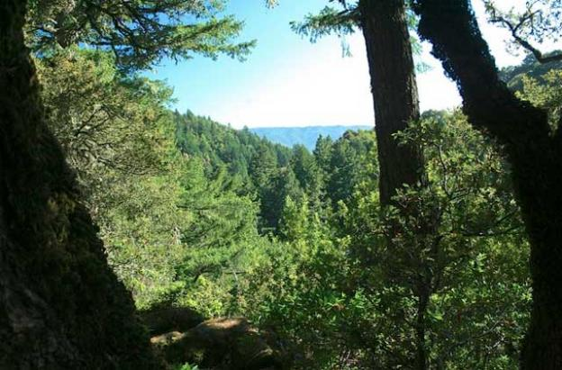 As with practcially every trail in the Skyline Ridge Complex, the Horseshoe-Fir Knoll-Tree Farm loop has some nice vistas.