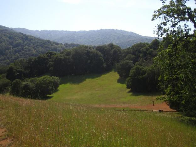The Mary Davey Loop opens up onto a high meadow.