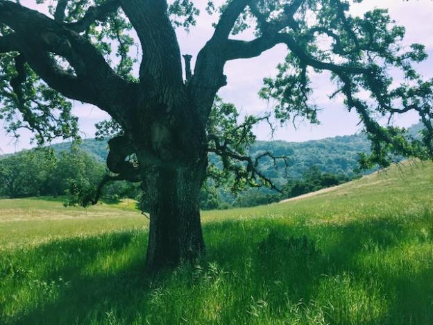 The oak trees and rolling hills along High Meadow Trail are one of the park's high points.