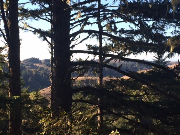 The view through Douglas firs across the valley to Butano Fire Road. Hilltromper photo.