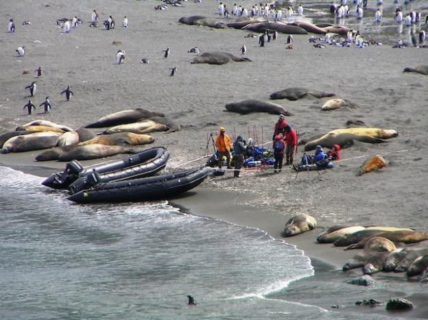 Southern elephant seals, people and penguins at Gold Harbor, South Georgia. The island teems with wildlife. Photo by Dan Linehan.