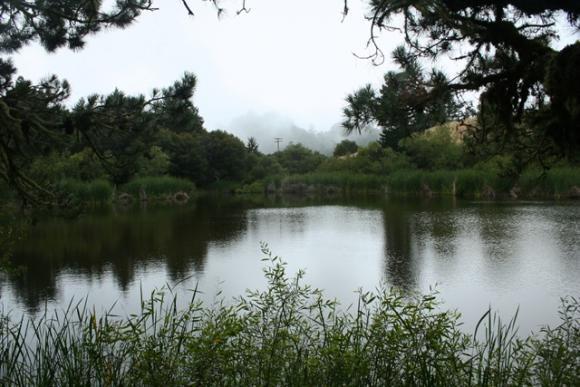 Tranquil Alpine Pond lies just west of the ridge of the Santa Cruz Mountains.