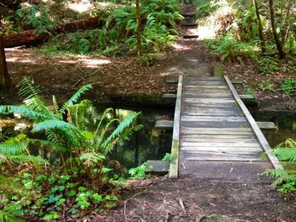 A creek crossing on Mill Ox Trail. Kelsey Farabee photo.
