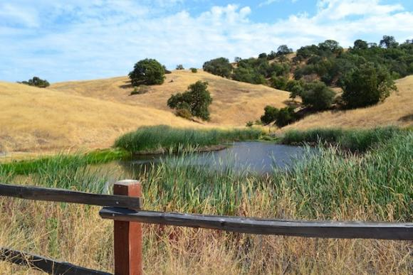 Amazing but true: Calero County Park has ponds and a reservoir. Brendan Bane photo.