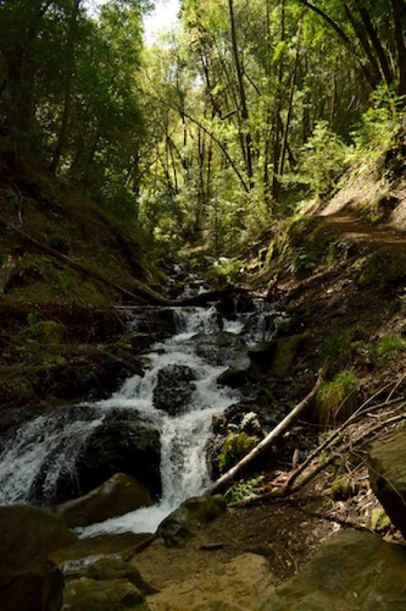 Follow Swanson Creek up the canyon on the Contour Trail. Photo by Christian Yungert.