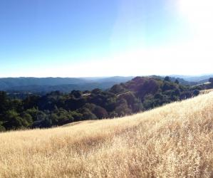 Those golden waves along the Ridge Trail.