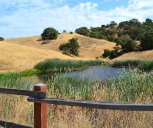 Amazing but true: Calero County Park has ponds and a reservoir. Brendan Bane photo.