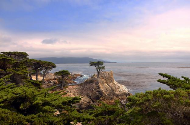 """The """"Lone Cypress"""" at Pebble Beach, arguably the most famous tree in North America. Photo by Sam Baldwin (Flickr)."""
