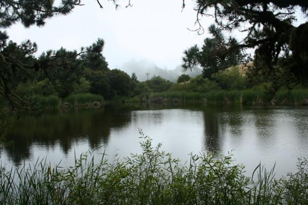 Tranquil Alpine Pond lies just west of the ridge of the Santa Cruz Mountains.