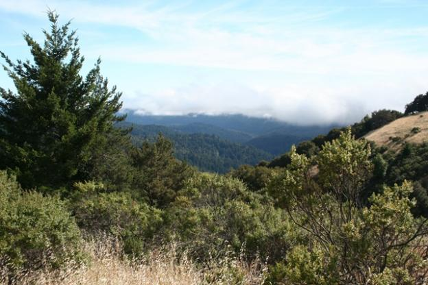 The Butano View Trail, as promised, has sightlines to the forested hills near Pescadero.