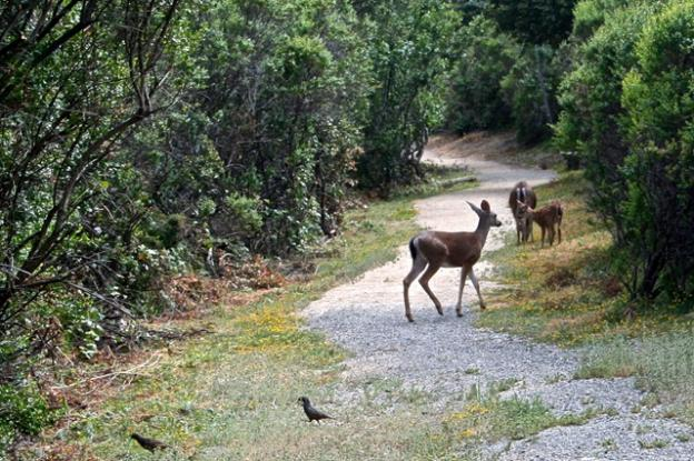 Quail and deer on the trail around Alpine Pond aren't too worried about hikers.