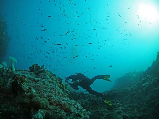 A diver swims below a school of rockfish. Oregon Department of Fish and Wildlife photo.