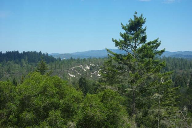 Some sandhills in the Santa Cruz Mountains are visible from the observation deck in Henry Cowell State Park. Photo by Emma Hiolski
