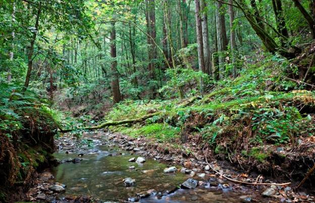 The San Vicente Redwoods lies in the heart of the Great Park. Photo by Karl Kroeber.