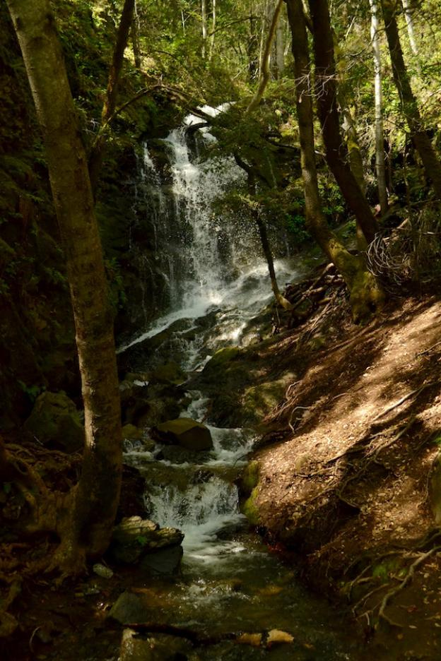Fed by natural springs, Swanson Creek flows year round. Photo by Christian Yungert.