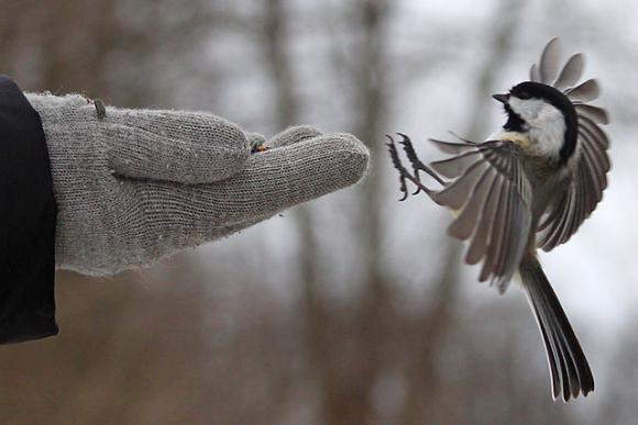 Dealing with threats takes a lot of avian energy. New research suggests birds send out warning calls about predators that are picked up by other species.  Photo by Bear Golden Retriever/CC.