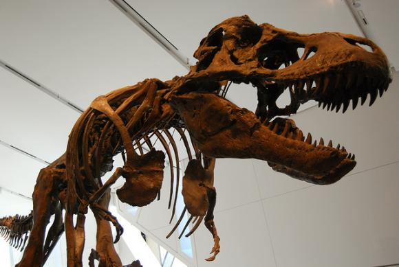 """A dinosaur skeleton. Photo by Mike Shaver / <a href=""""https://creativecommons.org/licenses/by-sa/2.0/legalcode"""" target=""""_blank"""">CC</a>"""