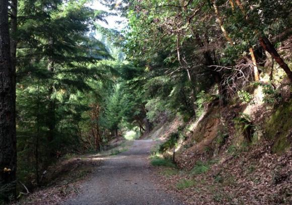 Happily, there is shade and plenty of scenery on Gordon Mill Trail in El Corte de Madera Open Space Preserve. Photo by L. Clark Tate.